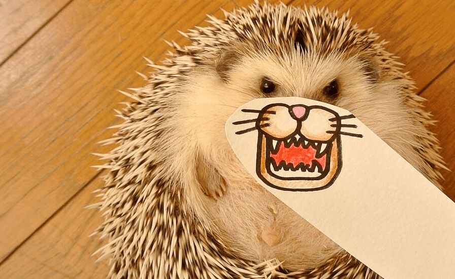 Syndicode Digest #28 – Lazy hedgehog. Syndicode